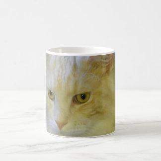 Gato de Coon de Maine del mascota del café de la Taza