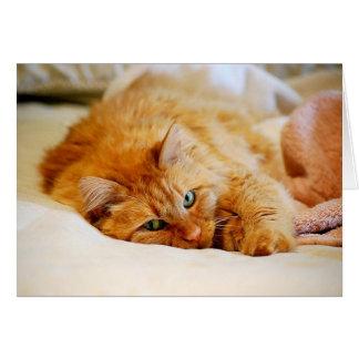 Gato de Coon de Maine del naranja dulce Tarjeta De Felicitación