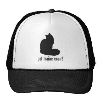 Gato de Coon de Maine Gorro