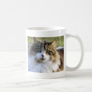 Gato de Coon de Maine Taza Clásica