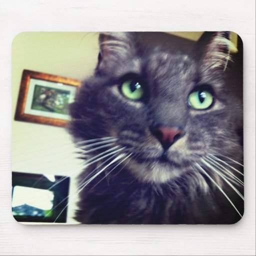 Gato de Coon gris de Maine Alfombrillas De Raton