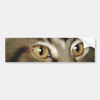 Gato de Coon negro de Maine del Tabby Etiqueta De Parachoque