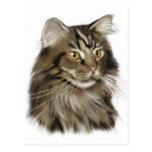 Gato de Coon negro de Maine del Tabby Tarjeta Postal