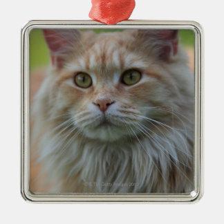 Gato de coon principal adorno navideño cuadrado de metal