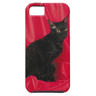 Gato de Cornualles del rex iPhone 5 Cárcasas