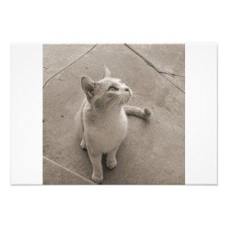 Gato de Currious Fotografías