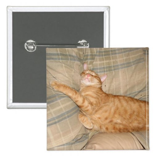 Gato de Dax Napping