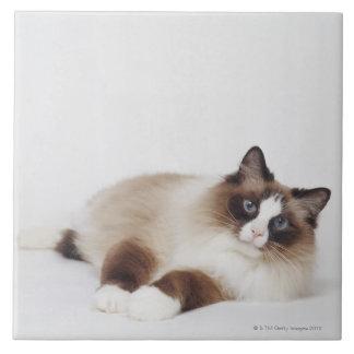 Gato de descanso azulejo cuadrado grande