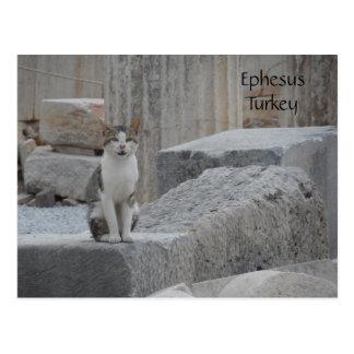 Gato de Ephesus Tarjeta Postal