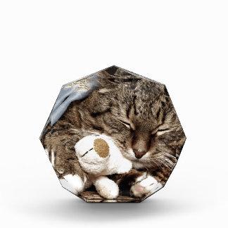 gato de la abrazo