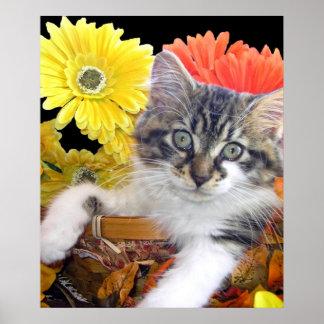 Gato de la actitud, gatito del gatito en Gerberas  Poster