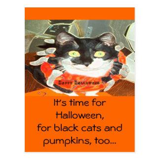 Gato de la araña tarjeta postal