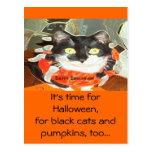 Gato de la araña tarjetas postales