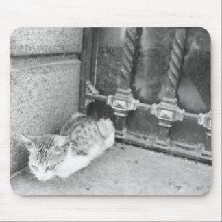 Gato de la Argentina Mousepads