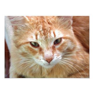Gato de la calle - jengibre Tom Invitación 13,9 X 19,0 Cm