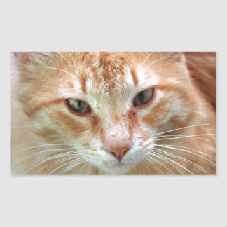 Gato de la calle - jengibre Tom Pegatina Rectangular