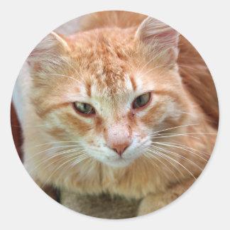 Gato de la calle - jengibre Tom