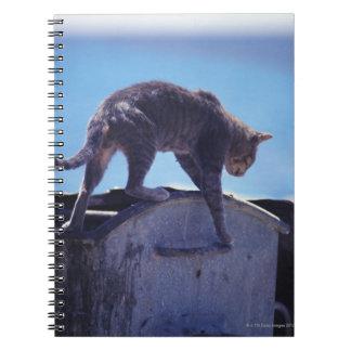gato de la calle libros de apuntes con espiral