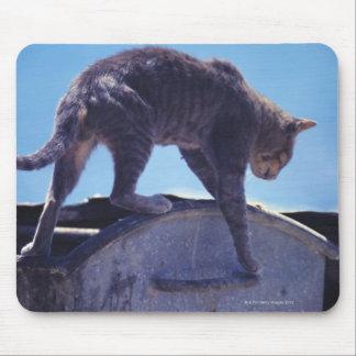 gato de la calle alfombrilla de ratón
