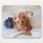 Gato de la esfinge con la malla azul Mousepad Tapete De Raton