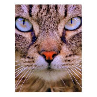 gato de la foto del tabby tarjeta postal