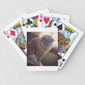 Gato de la genética barajas de cartas