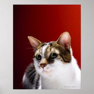 Gato de la Isla de Man Impresiones