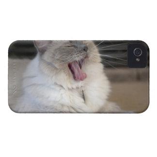 Gato de la mascarada de Neva que bosteza Case-Mate iPhone 4 Protectores