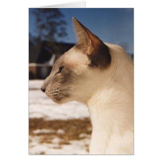 Gato de la nieve - perfil siamés del punto azul tarjetón