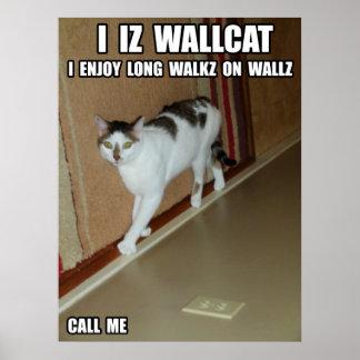 Gato de la pared póster
