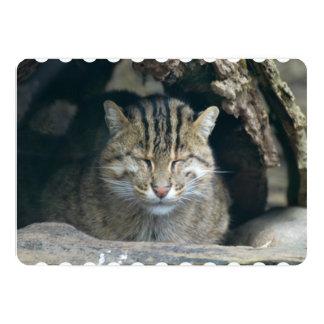 Gato de la pesca el dormir invitación 12,7 x 17,8 cm