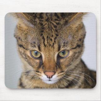 Gato de la sabana alfombrillas de ratón