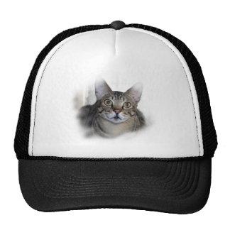 Gato de la sabana gorras