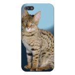 Gato de la sabana iPhone 5 carcasa