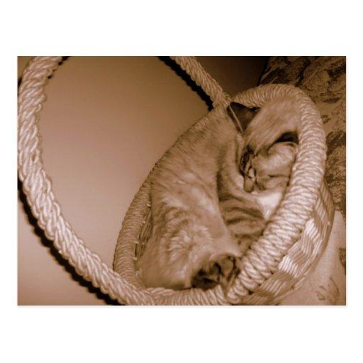 Gato de la sepia en postal el dormir de la cesta