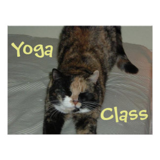 Gato de la yoga posters