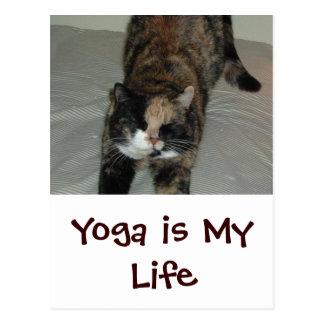 Gato de la yoga postal