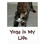 Gato de la yoga postales