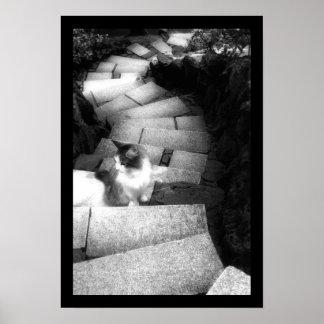 Gato de las escaleras de Steping Póster