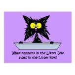 Gato de Litterbox Tarjeta Postal