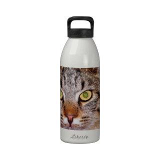 Gato de Maine-Coone Botallas De Agua