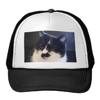 Gato de Monty Gorro