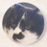 Gato de Monty Posavasos Manualidades
