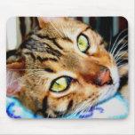 Gato de Mousepad Bengala Tapetes De Raton