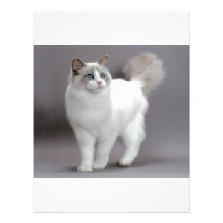 Gato de ojos azules Purfection de Ragdoll Plantillas De Membrete