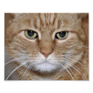 Gato de ojos verdes del jengibre cojinete