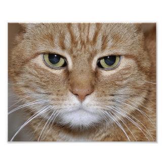 Gato de ojos verdes del jengibre arte con fotos