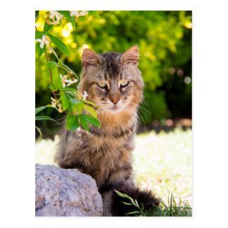 Gato de ojos verdes en la postal de Ravello Italia