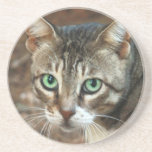 Gato de ojos verdes posavasos diseño