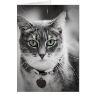 Gato de ojos verdes tarjeta de felicitación